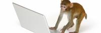 Monkey_Shake