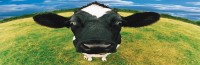 We've Got Depressed Cows