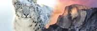 Snowsemite
