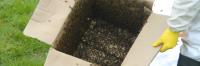 Box of Bees