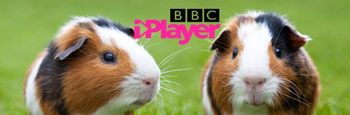 The iPlayer Guinea Pig