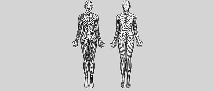 Humans have stripes